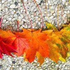jesienny-usmiech